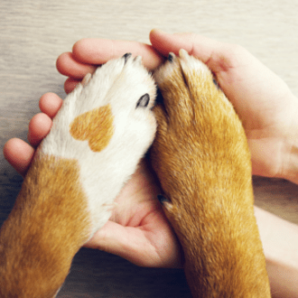 Dog paws with hands